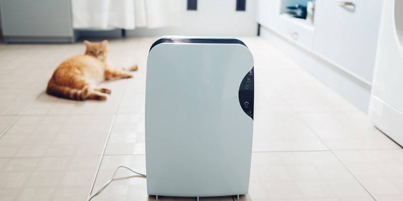 Best Air Purifier for cats with asthma