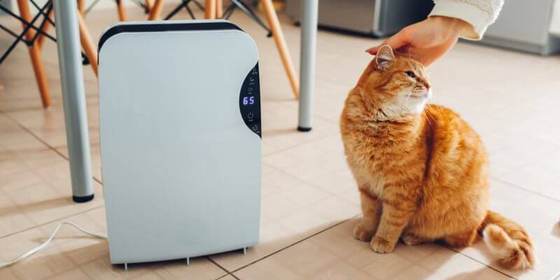 Best Air Purifier for pets revoit